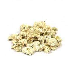 Camomille Romaine capitule floral trié entier 100gr